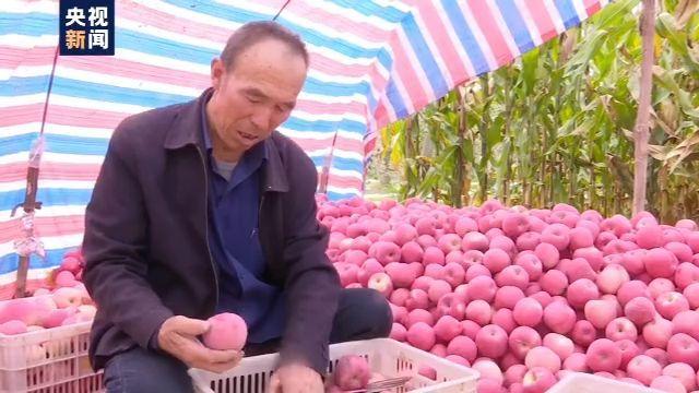 苹果产量稳中略降 今年价格将如何?