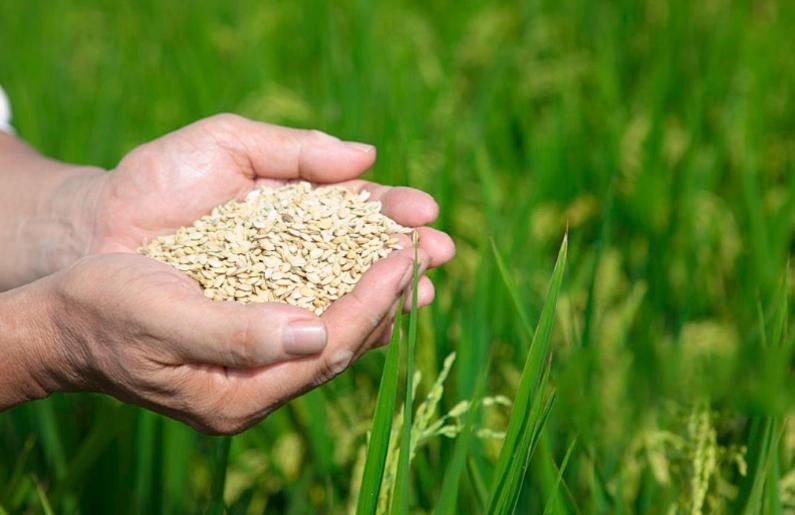 粮食产量年年增产的背后是科技的力量