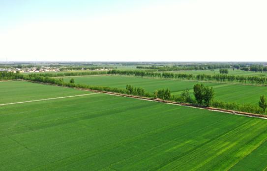 河北省水利厅:49处大中型灌区已春灌农田486万多亩